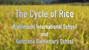 The Cycle of Rice